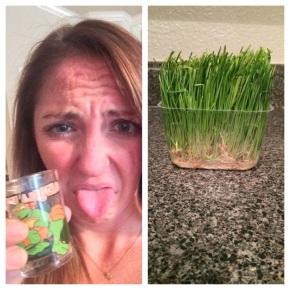 Spinach vs. Wheatgrass